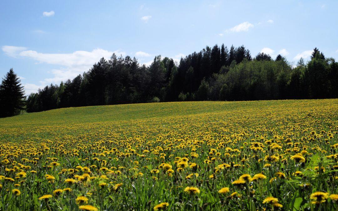 Alpuasta ja Päiväkoti Heikkarista oli juttua 10.6.2020 Raahen Seudussa